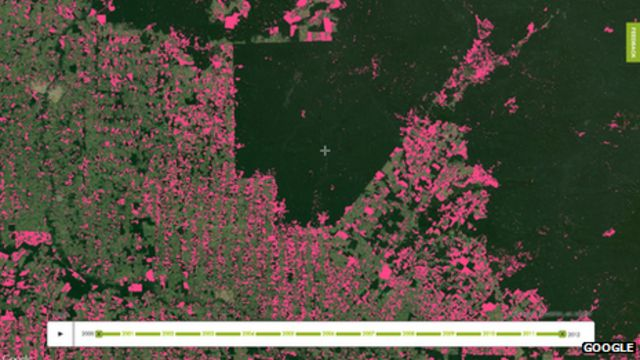 New online tool tracks tree loss in 'near real time'