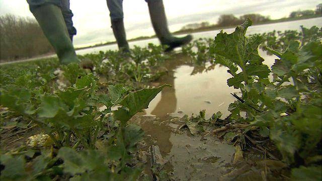 Water-logged crop field