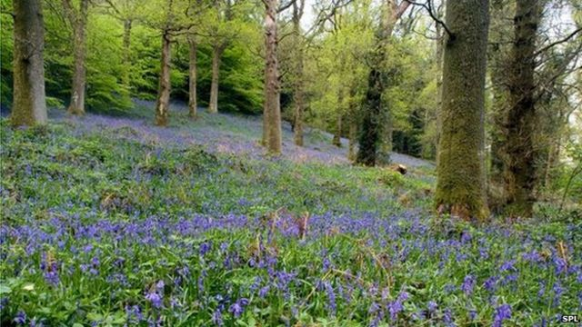 Ancient woodland losses 'not accounted for', say campaigners