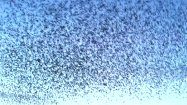 The sky full of starlings