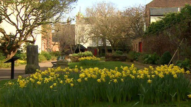 Daffodils in Carlisle