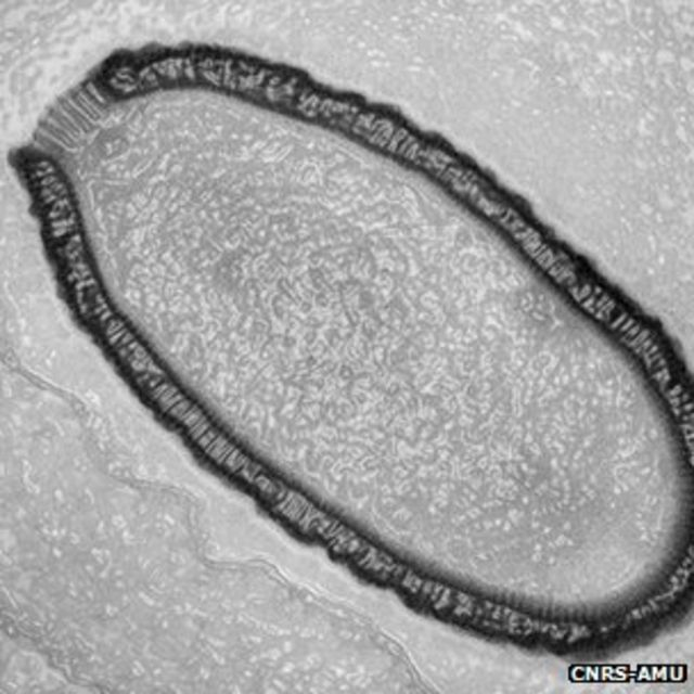 30,000-year-old giant virus 'comes back to life'
