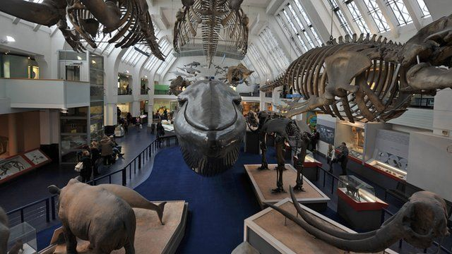 General interior view of the Natural History Museum