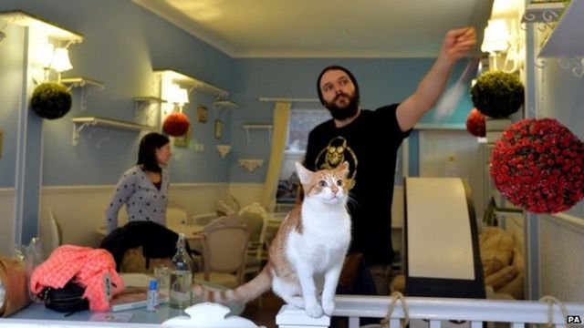 London cat cafe opens to two-month waiting list