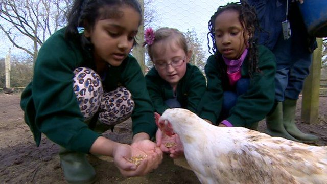 Children feeding a chicken