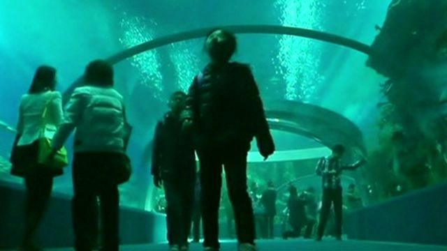 The Undersea Tunnel at Hengqin Ocean Kingdom theme park