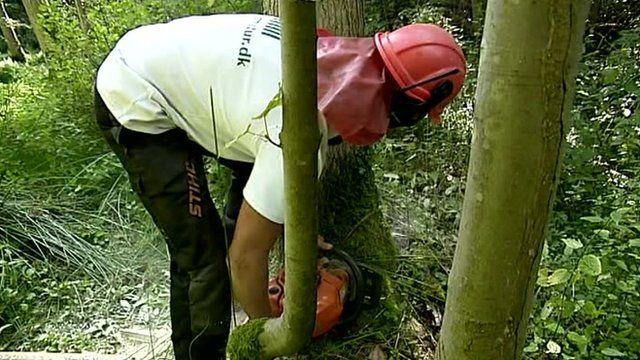 man cutting trees