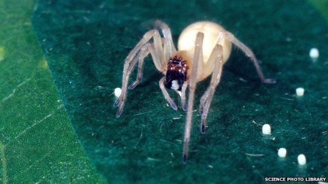 Spider invasion prompts Mazda software fix