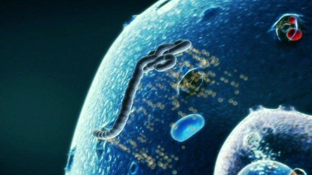 Graphic illustration of Ebola virus