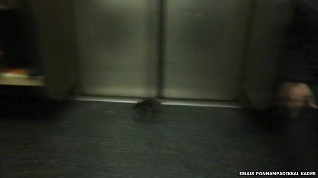 Rat on subway train