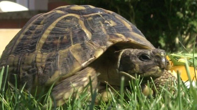 Freddy the tortoise
