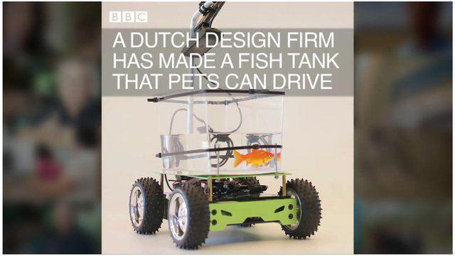 Fish drives a tank