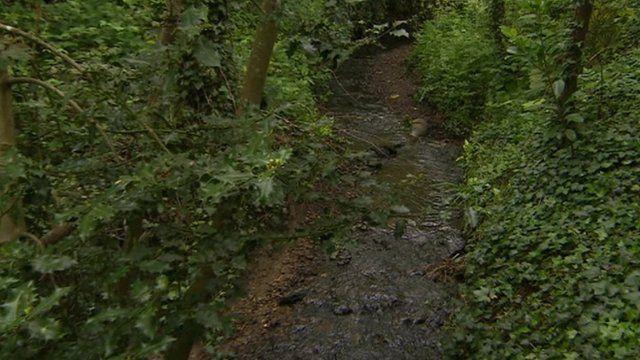 The stream runs via a culvert under driveways in a road in Waterlooville