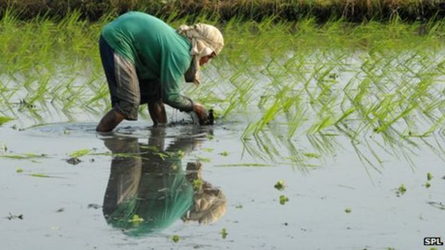 CO2 'significantly reduces' nutrients in major food crops