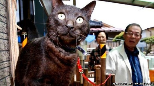 Japan: Cat returns home three years after tsunami