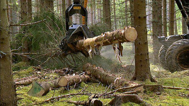 Trees being felled