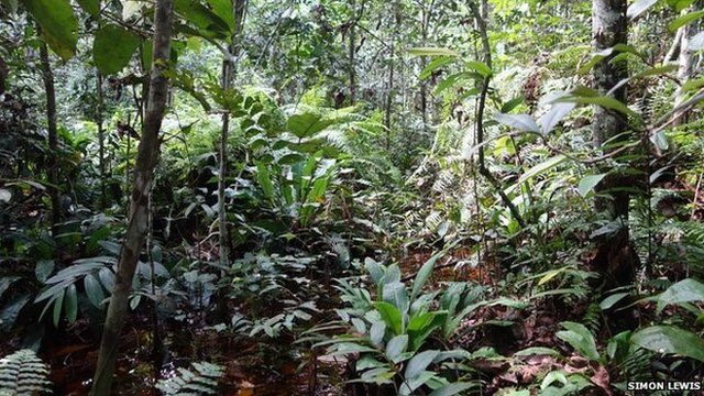 Giant peat bog discovered in Congo-Brazzaville