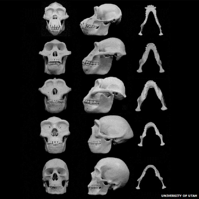 Male faces 'buttressed against punches' by evolution