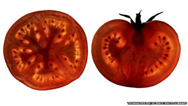 'Tomato pill' hope for stopping heart disease