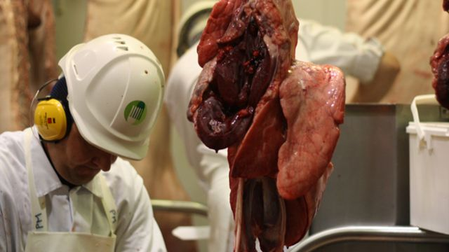 'Diseased meat could go undetected' due to rule change