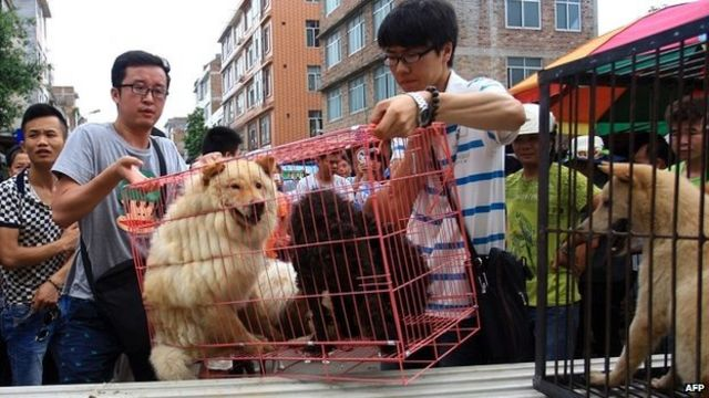 Chinese dog-meat dilemma: to eat or not to eat?