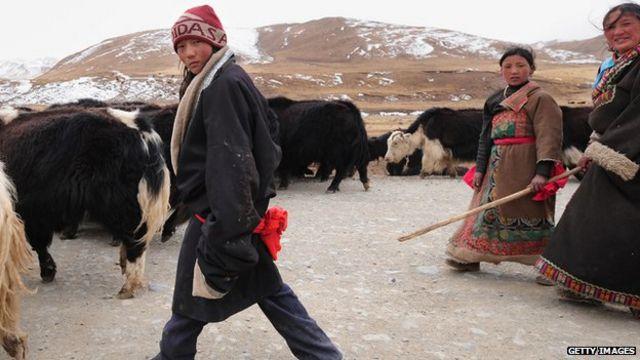 Tibetan altitude gene inherited 'from extinct species'