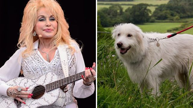 Dolly Parton and Dolly the dog