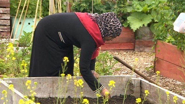 Woman at her allotment