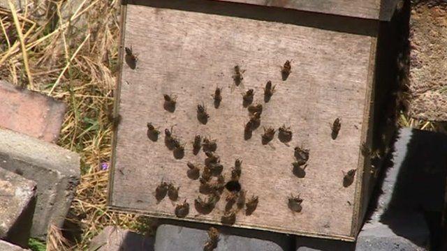 Bees at Southampton Docks