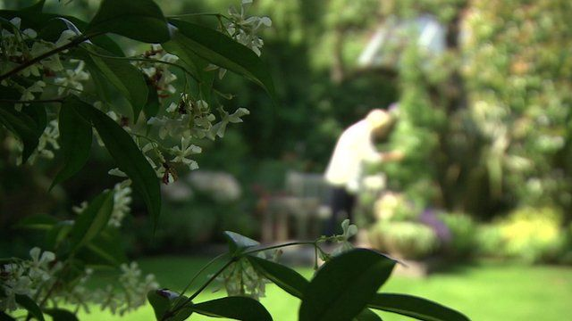 A woman in the garden