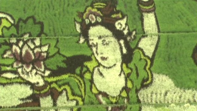 Maiden art in rice field