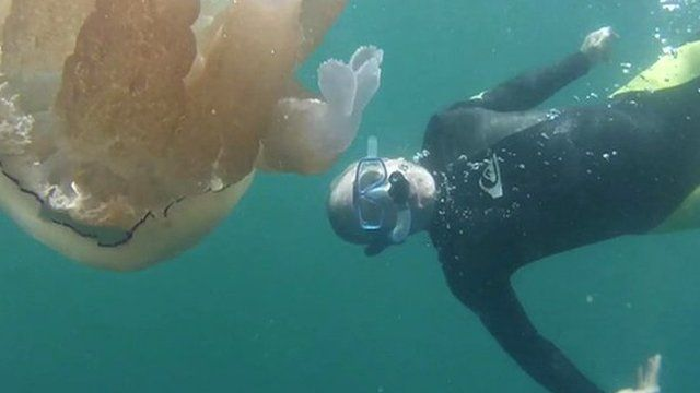 John Maguire and jellyfish