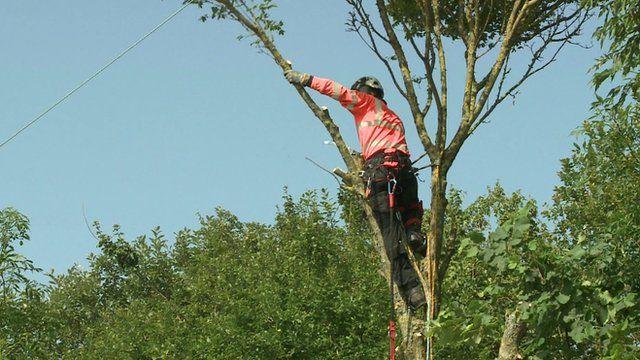 A branch being cut down near a power line