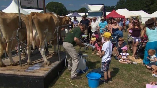 Milking cows at the New Forest Show