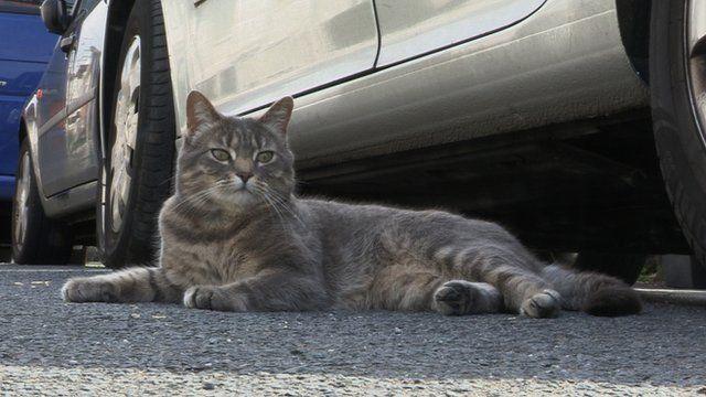 Smudge the city cat