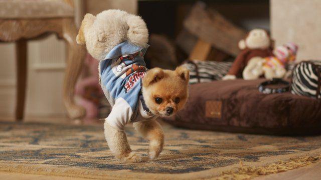 Record breaking dog Jiff