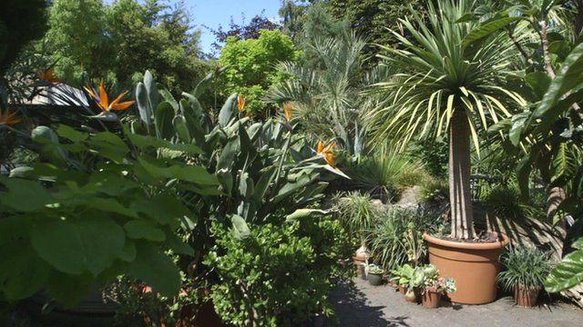 Tim Wilmot's tropical garden