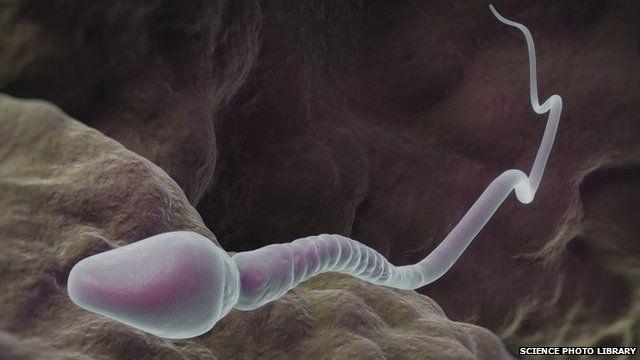 Artwork of a single sperm cell in a human fallopian tube