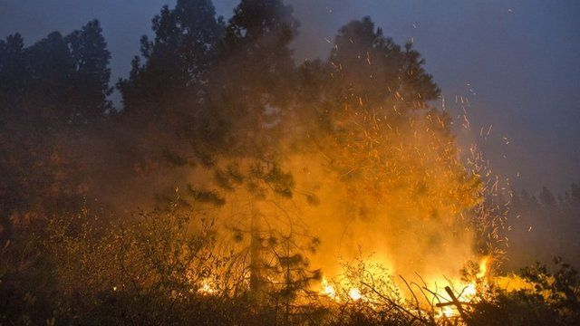 Fire burns through tall trees near Uncle Tom's Cabin in El Dorado County on Thursday, Sept. 18, 2014. The King fire has burned over 70,000 acres