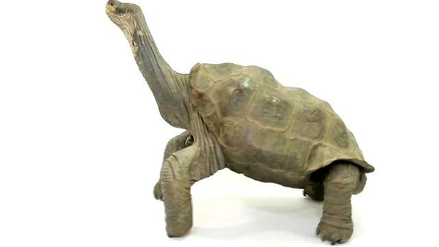 Lonesome George preserved