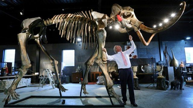 Skeleton of an Ice Age Woolly Mammoth