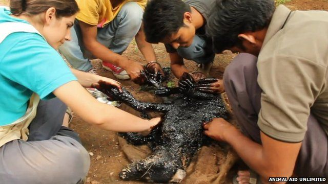 Volunteers clean tar from a dog