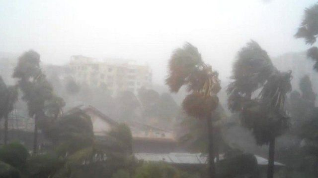 Palm trees being blown by winds