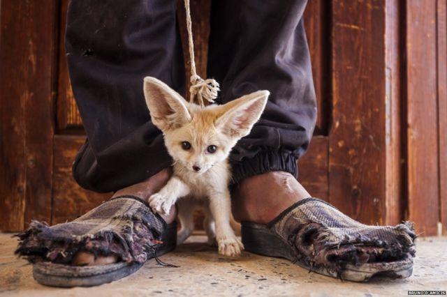 Slumbering lions win top wildlife photo prize