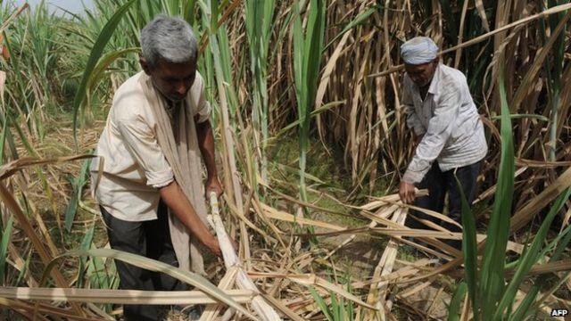 UN urges salt-damage solution to reduce threat to crops