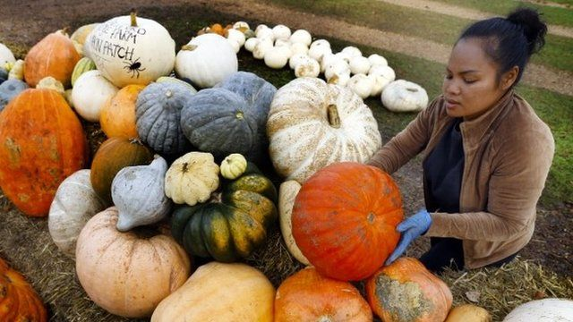 Woman with pumpkins in Surrey