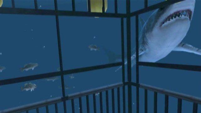 Virtual reality shark