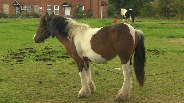 Horse on open land