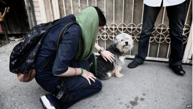 Iran: MPs propose lashes for dog walkers