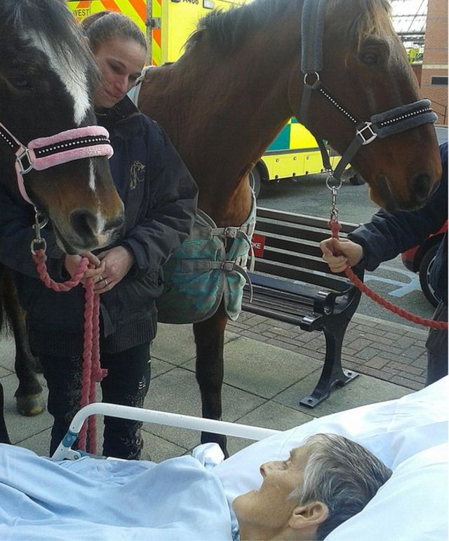 Woman dies after farewell to horse at Wigan hospital